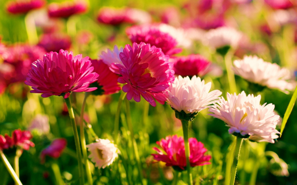 картинки на рабочий стол летние цветы красивые № 260280 бесплатно