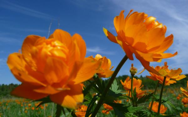 ... Цветы » Картинки 24 - скачать картинки: www.kartinki24.ru/kartinki/ogonki/1058...