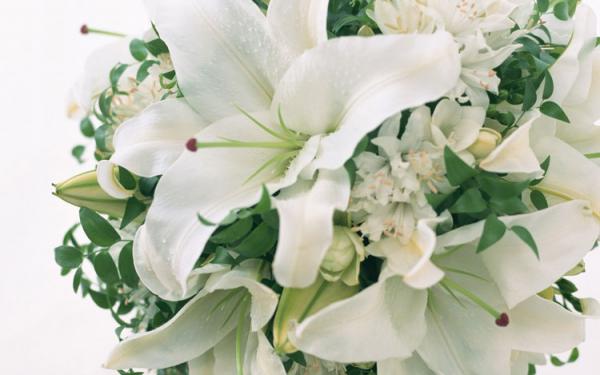 Цветы красивые букеты белые розы с 48