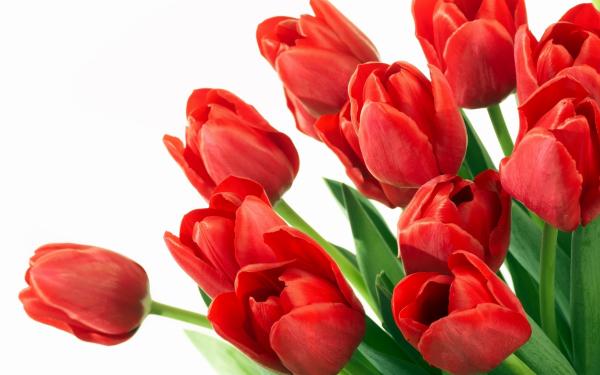 смотреть бесплатно 8 марта мамы: