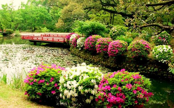 Цветы у пруда чайка