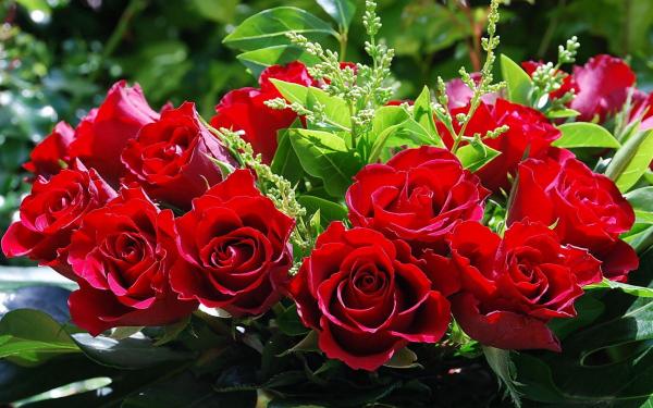 Розы красные фото букеты красивые фото