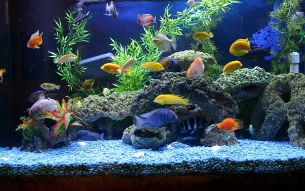 Картинка рыбы в аквариуме - 062