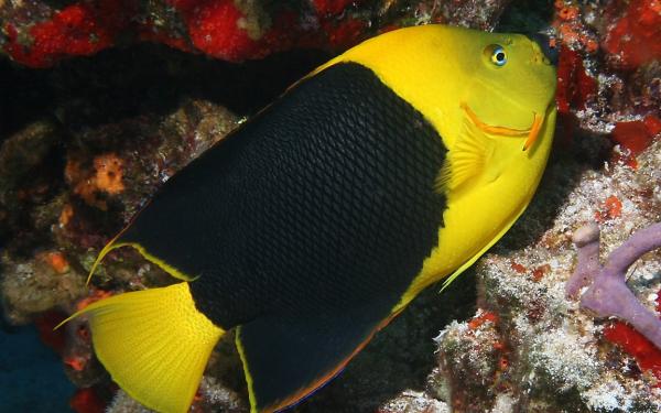 Картинка рыбы в аквариуме - 74