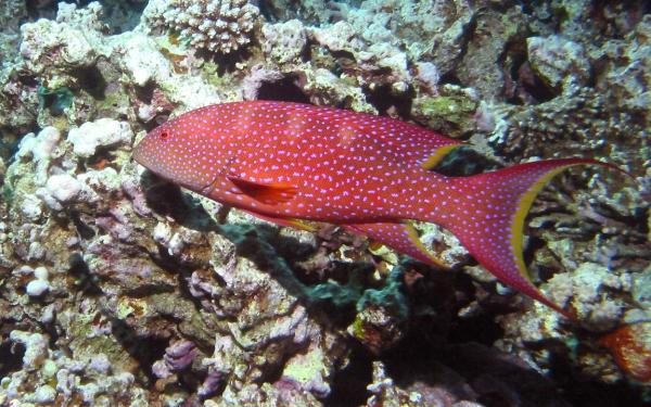 Картинка рыбы в аквариуме - ae5