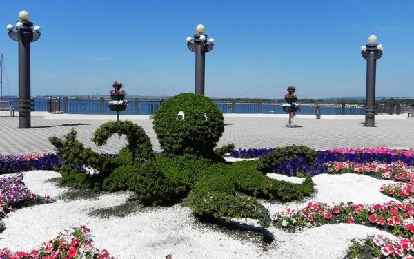Однолетние цветы для дачи на все лето какие выбрать