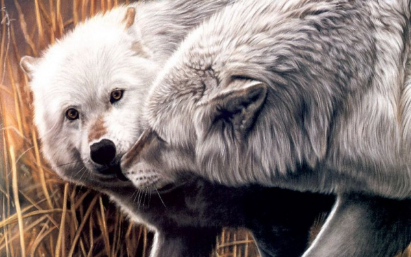 Картинка волки целуются - e65