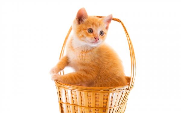 Картинка Котенок в корзинке » Котята » Животные » Картинки ...