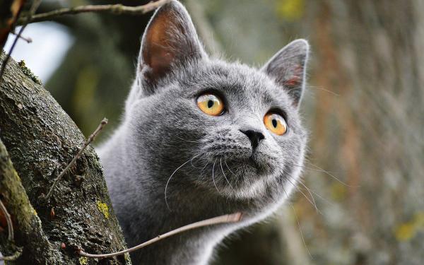 Картинка Кошка на дереве » Кошки » Животные » Картинки 24 ...
