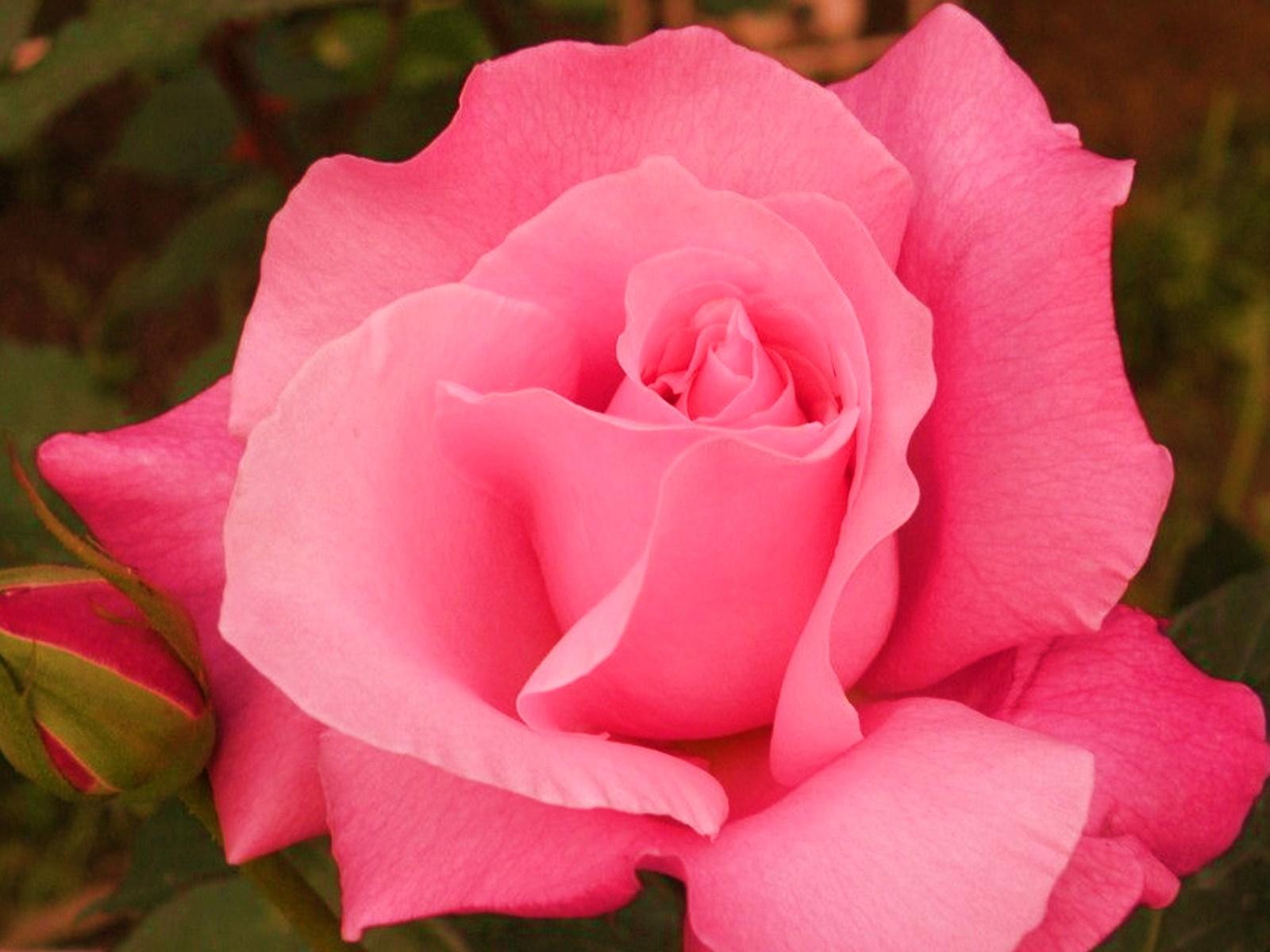 игры картинки розы