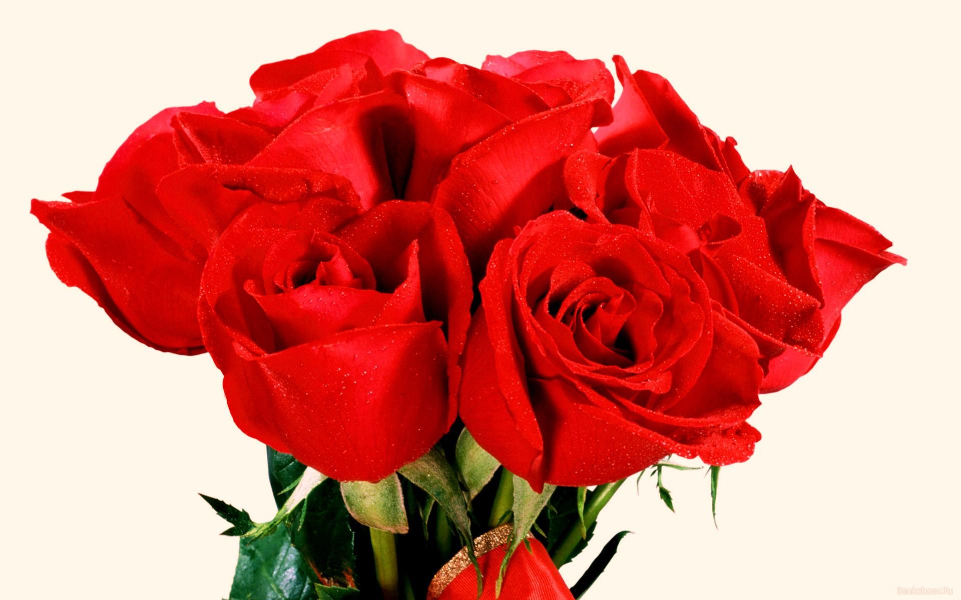 Лучшие цветы для девушки фото