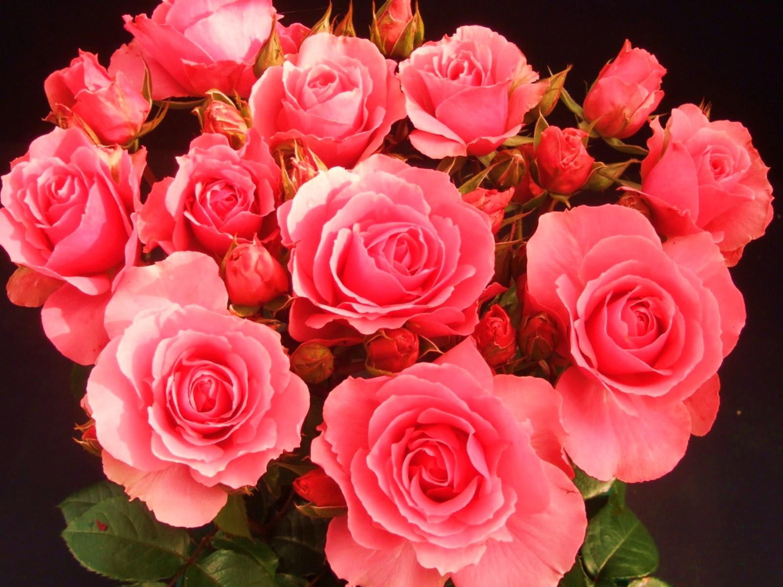 ᐈ роза: картинки и фото цветы розы, скачать изображения на.