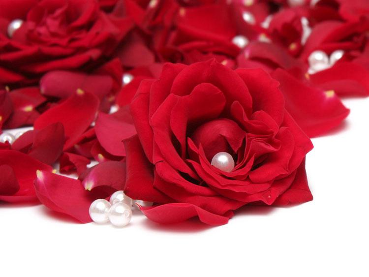 красивые картинки с розами