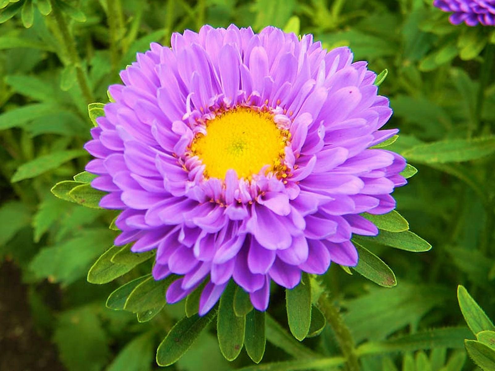 Картинки для детей Цветы  kladrazru