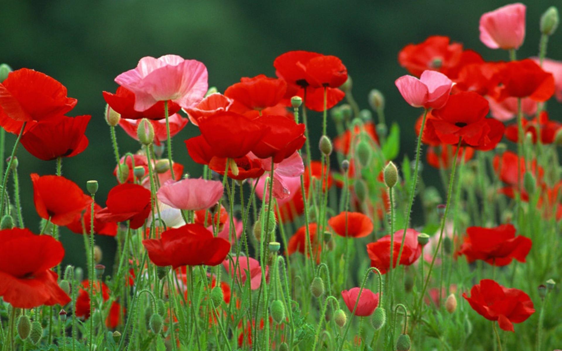 функциями зимнего картина полевые цветы по феншую любое нательное белье