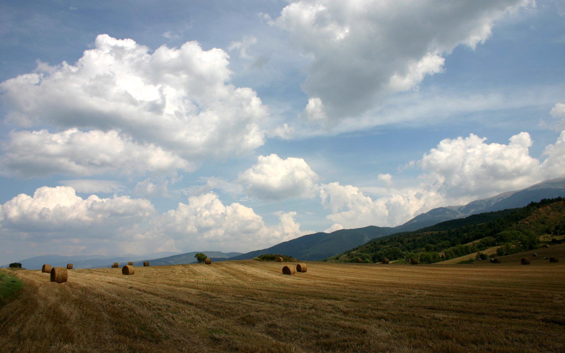 поле осеннее фото