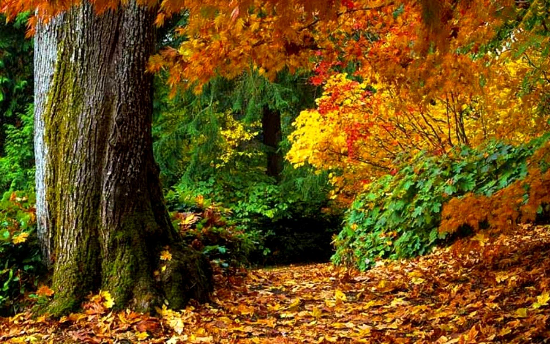 Картинка В лесу осень » Лес » Природа » Картинки 24 ...
