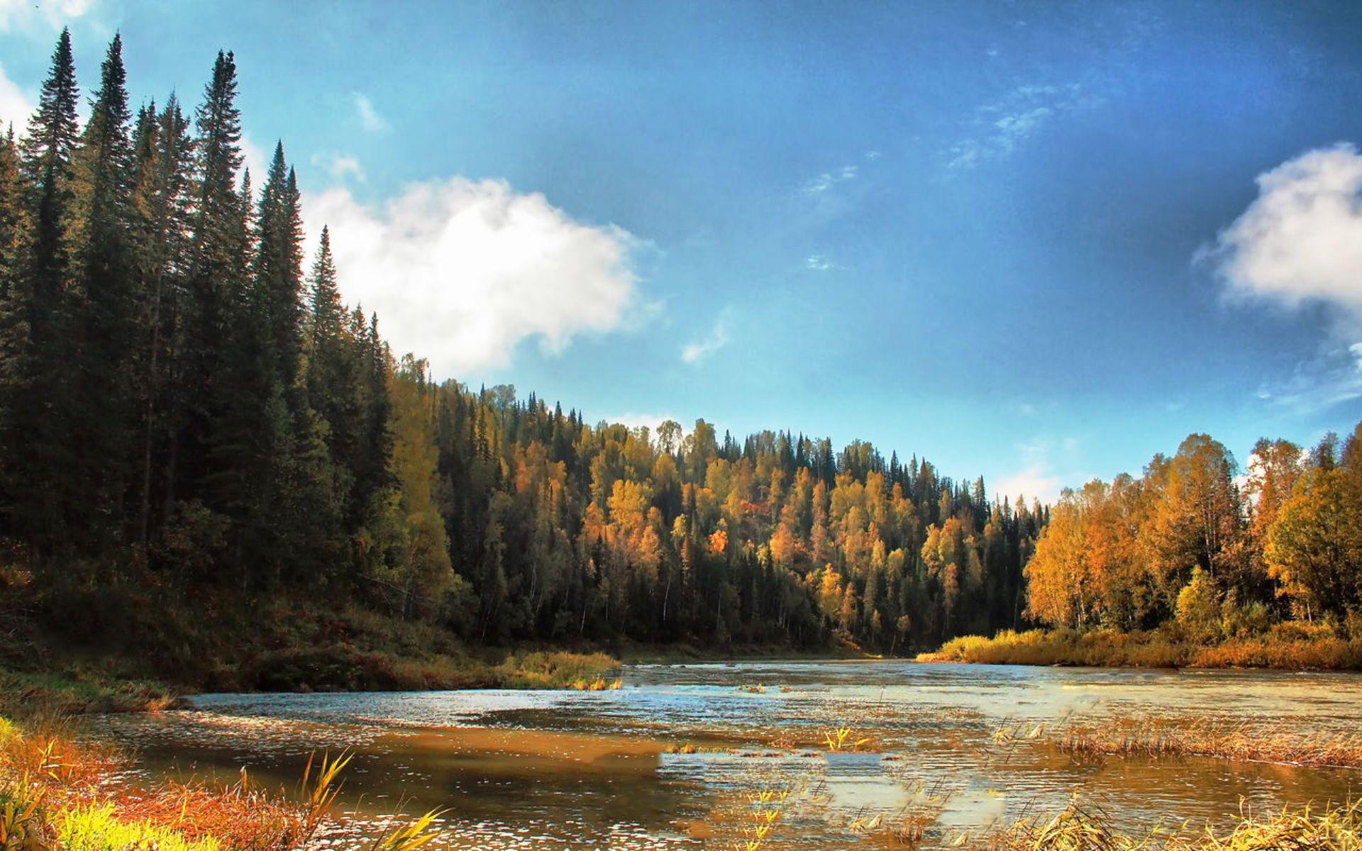 Скачать бесплатно картинку осенний лес