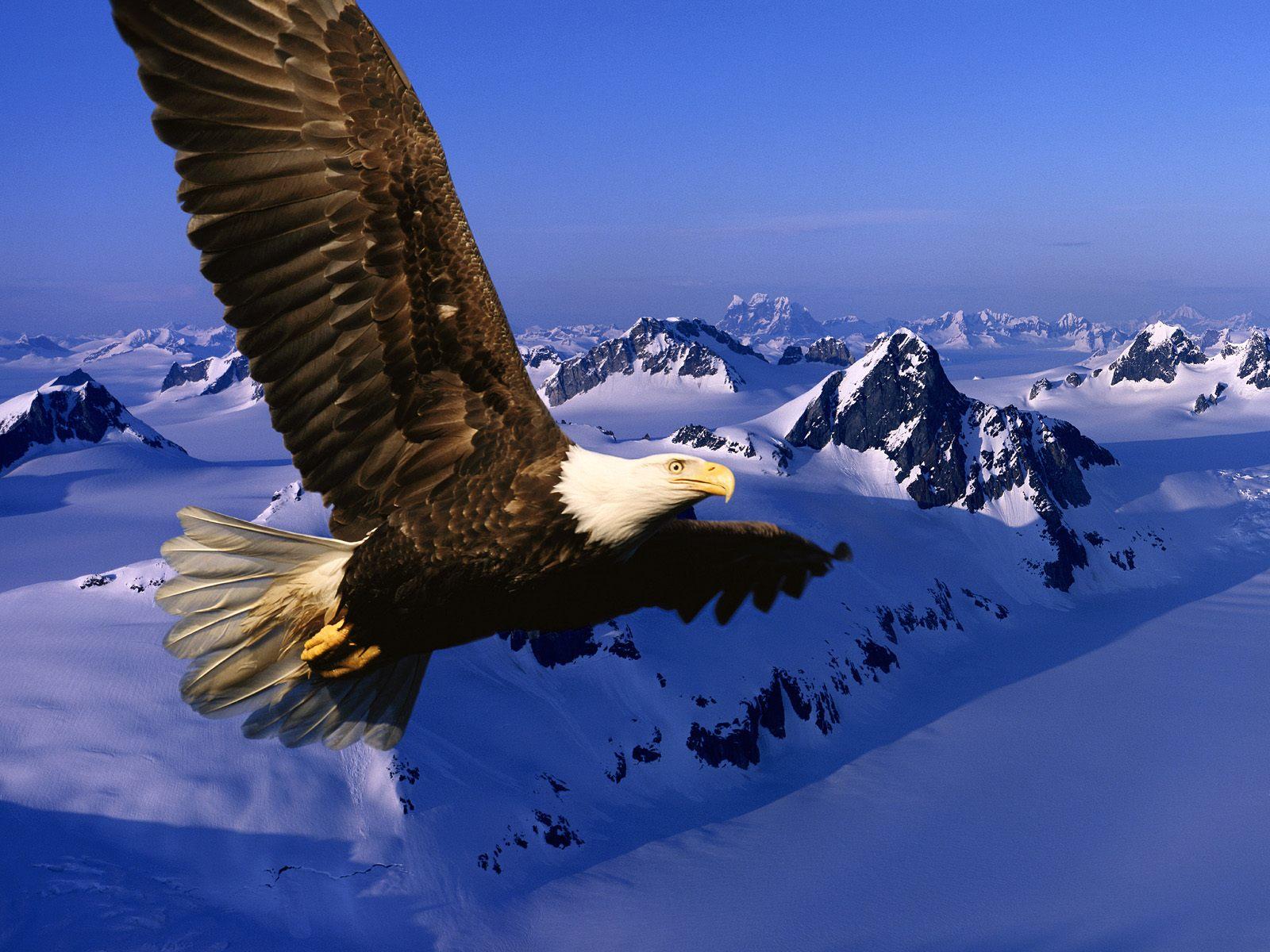 фото орла скачать