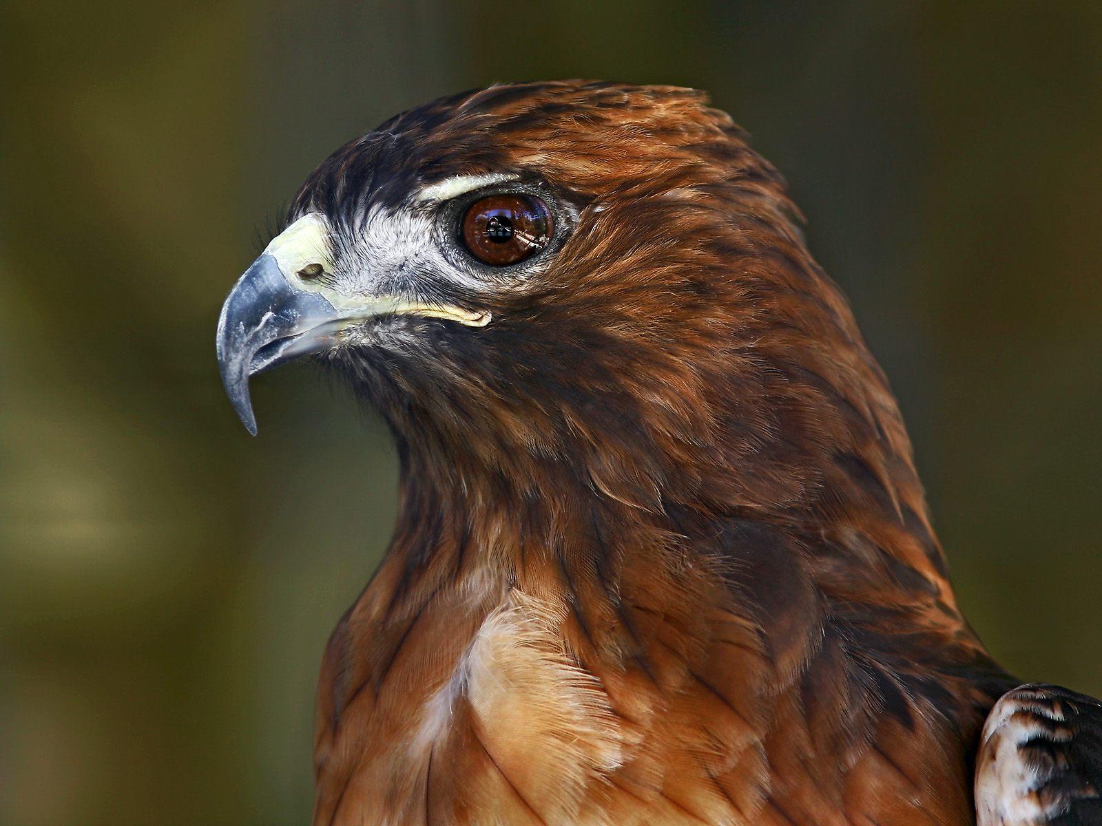 eagle авто фото
