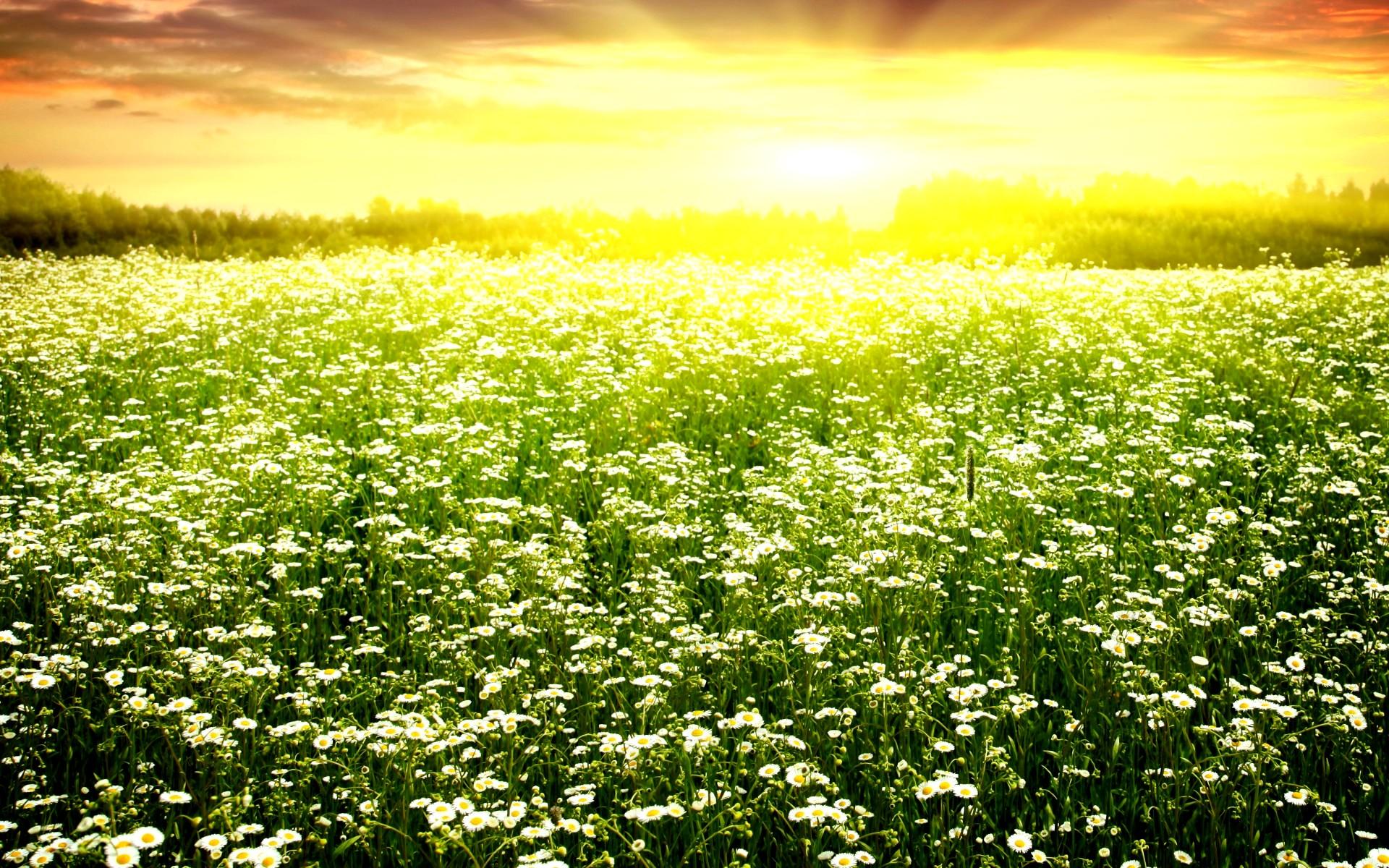 Полевые цветы на рассвете 73