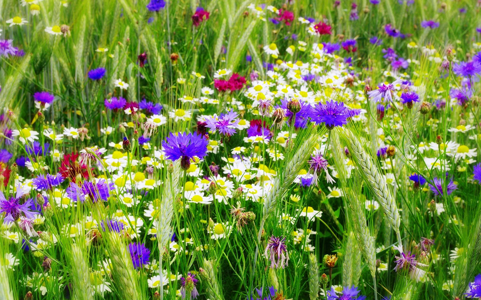 Поля цветов в москве