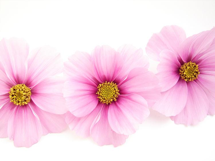 Цветы маленькие красивые