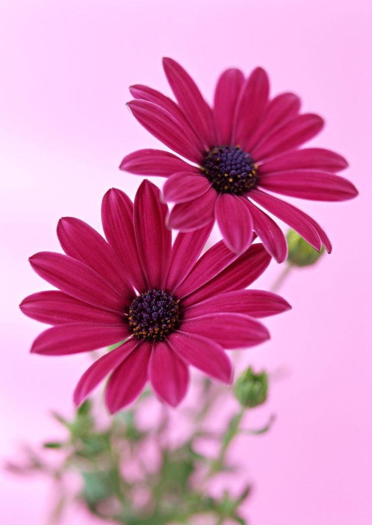 Цветы разные фото красивые