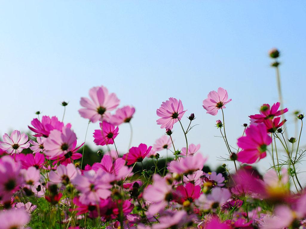 Открытка природа цветы 63