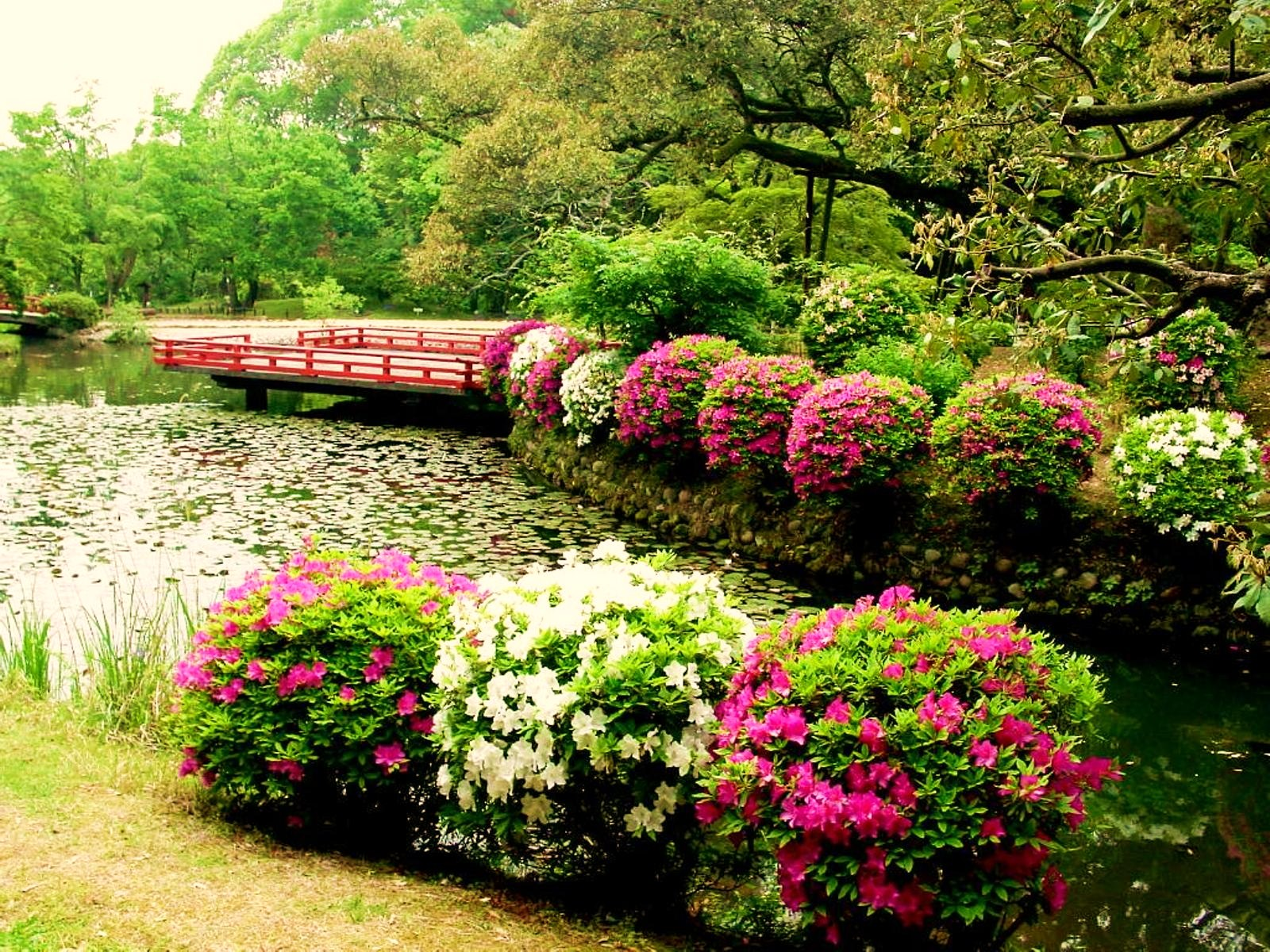 Цветущие кустарники в ландшафтном дизайне