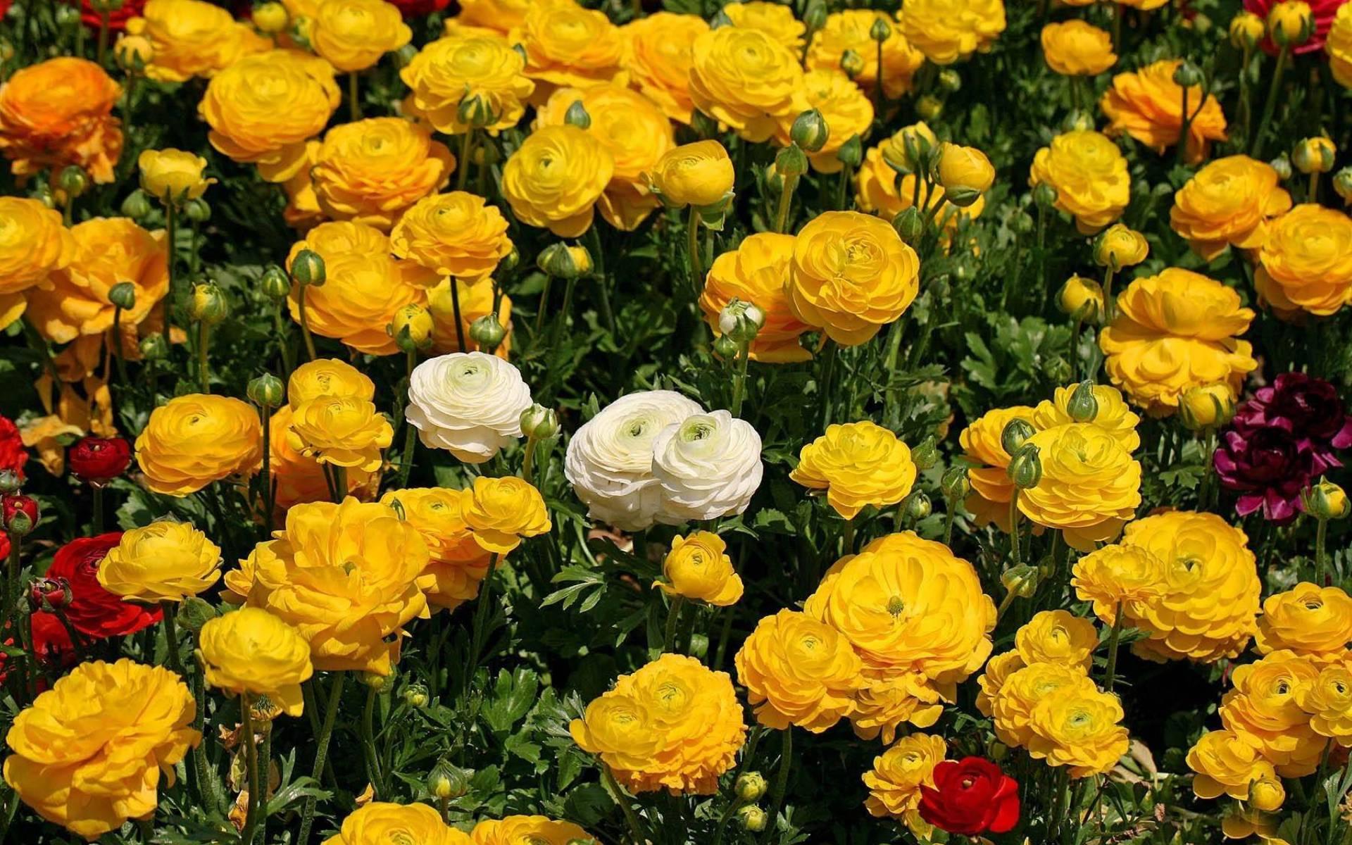 Лютики лютики цветочки скачать mp3