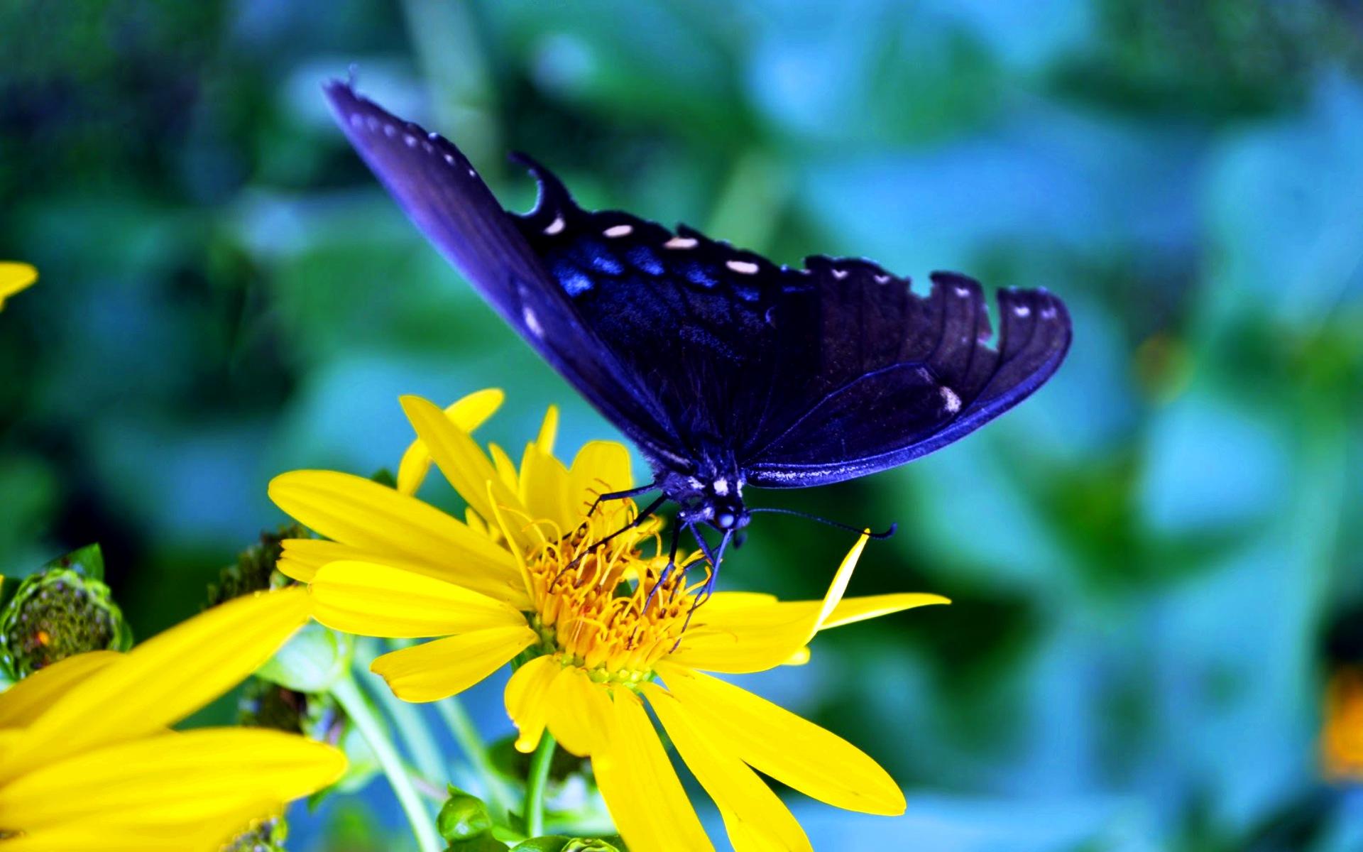 Картинки природа бабочка на цветке