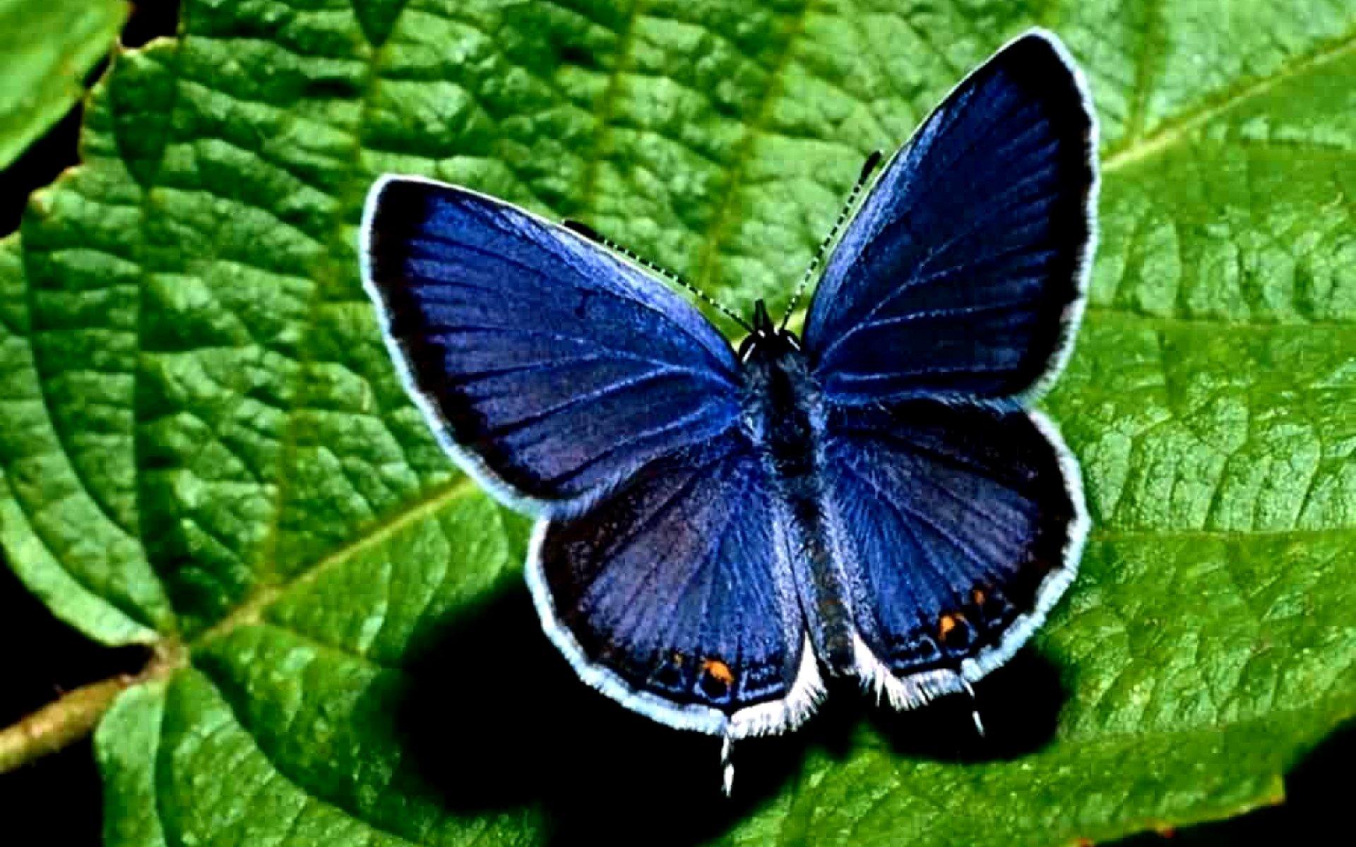 http://www.kartinki24.ru/uploads/gallery/main/217/kartinki24_ru_butterflies_87.jpg