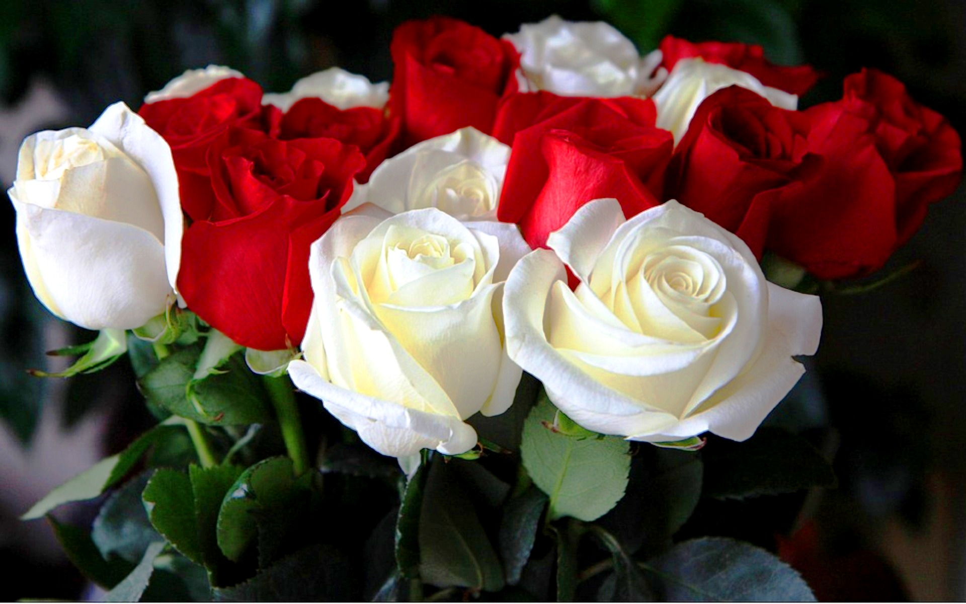 Алые розы mp3 скачать бесплатно