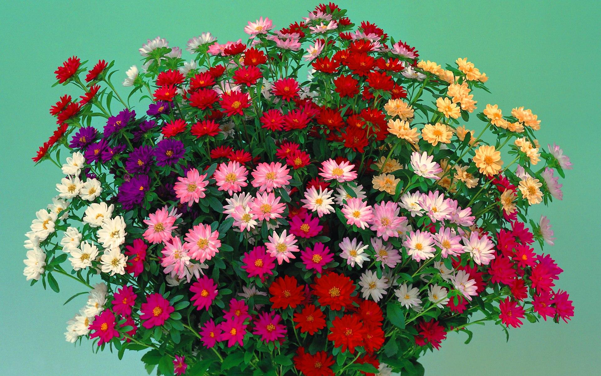Скачать бесплатно картинки букеты живых цветов 10