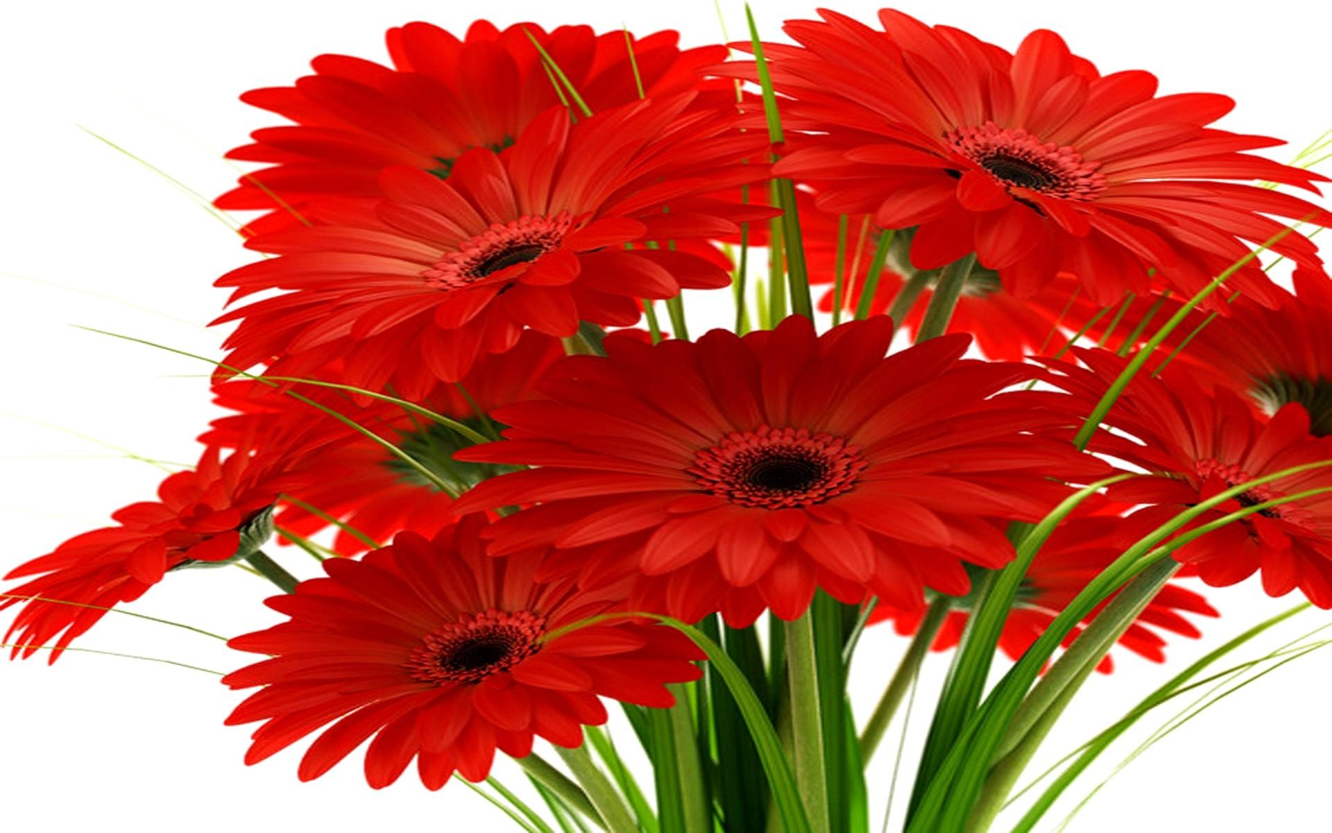 Герберы фото цветов букетов