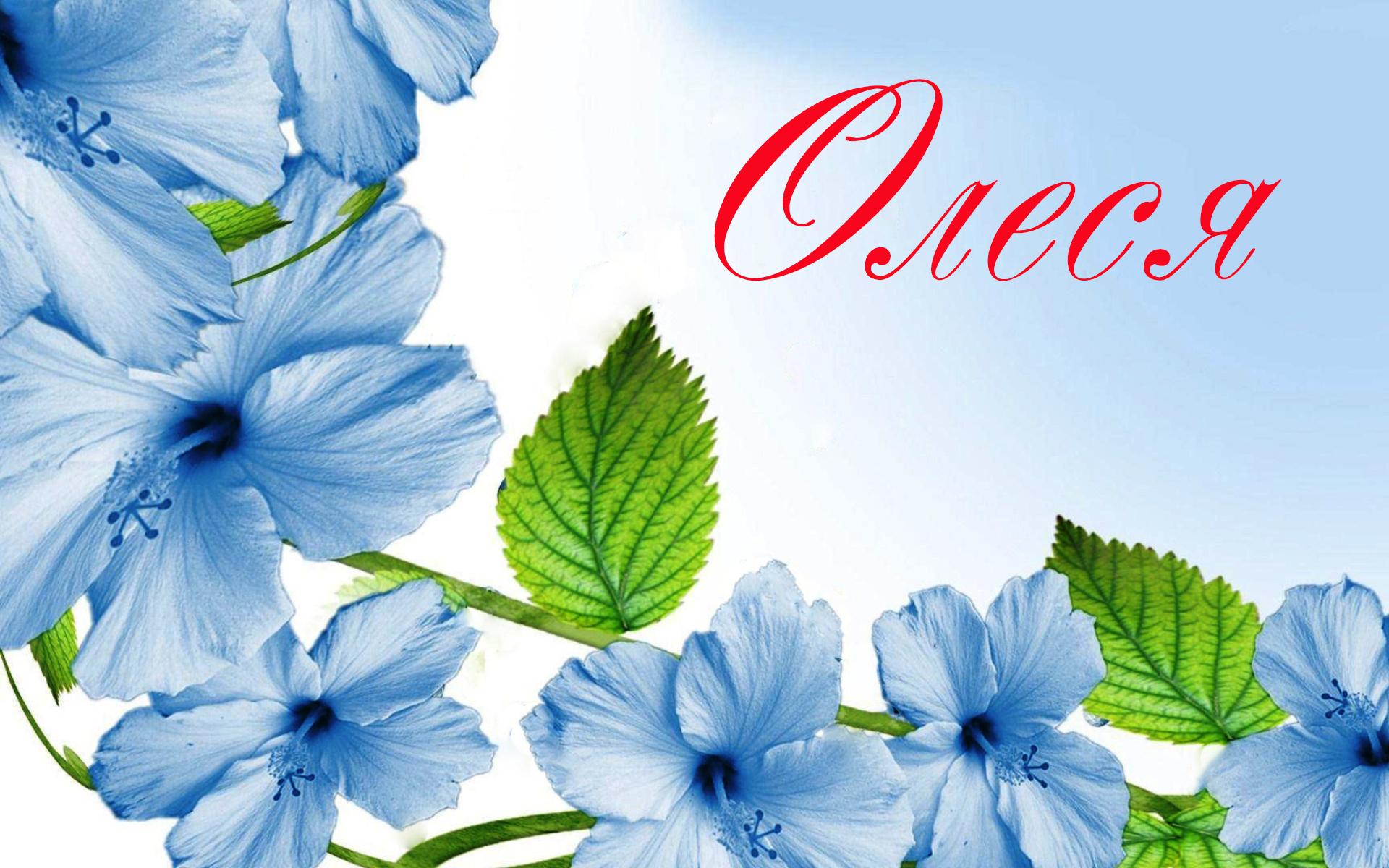 """Поздравления с днем рождения в картинках для имени """"Олеся&quot 63"""