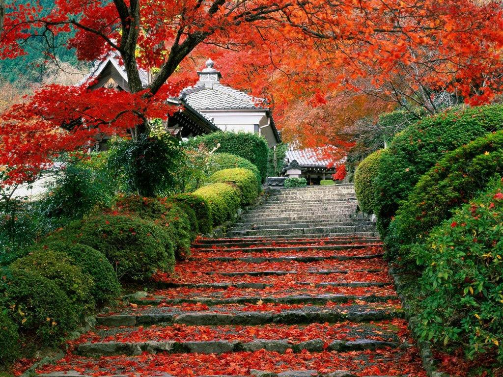 Осень в парке  Фото мир природы