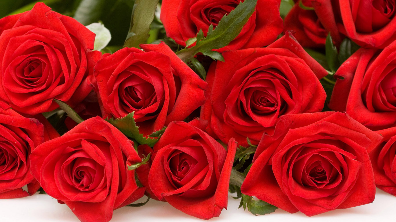 Скачать бесплатно розы красные розы алые розы красные