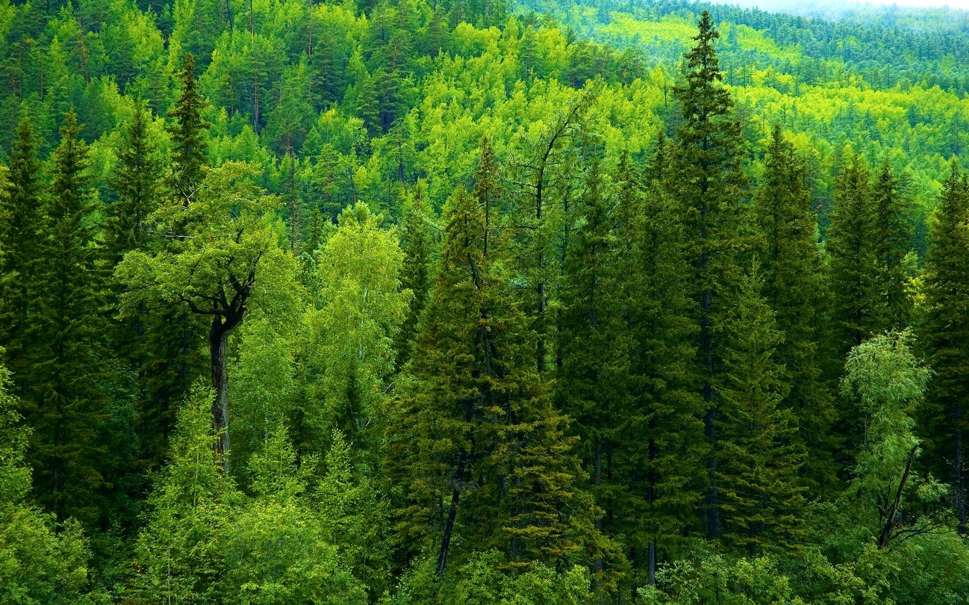 Картинки по запросу Сибирская тайга