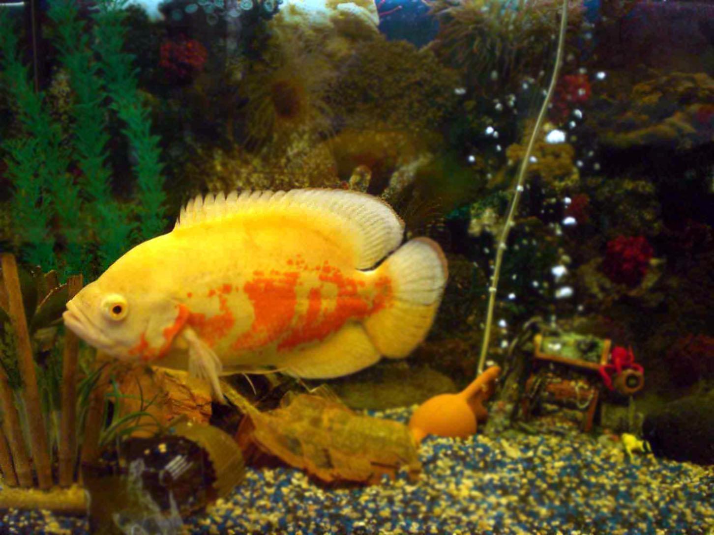 Картинки разные рыбы