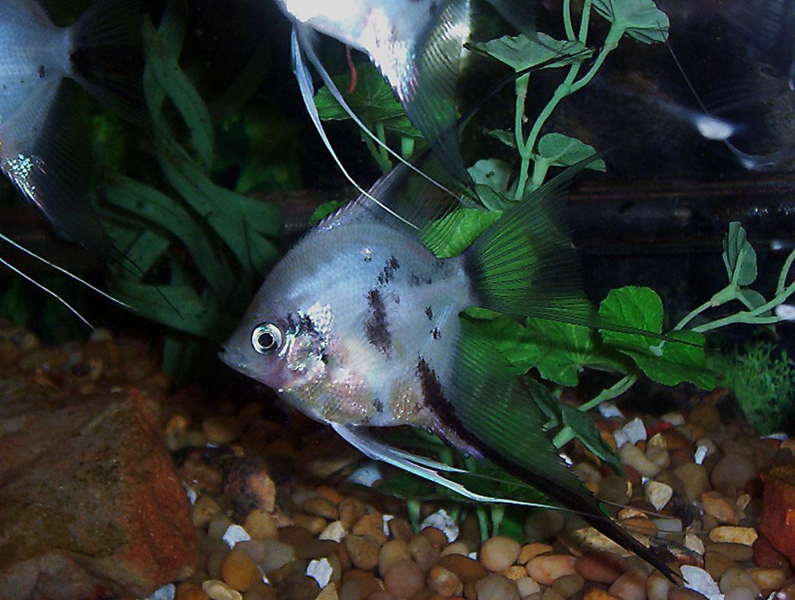 Рыбы разные картинки