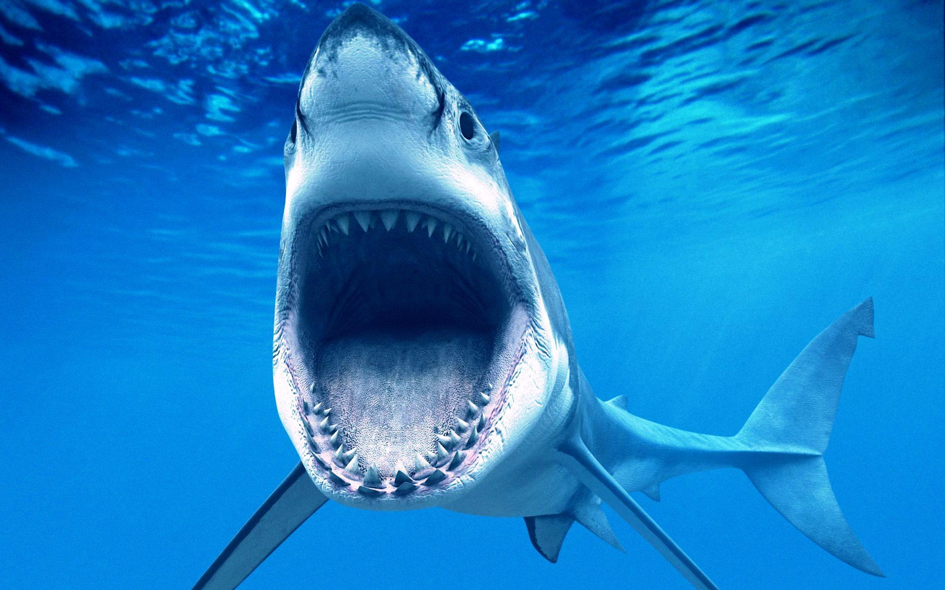 Картинка с плывущей у дна акулой. Скачать аватар акулы.