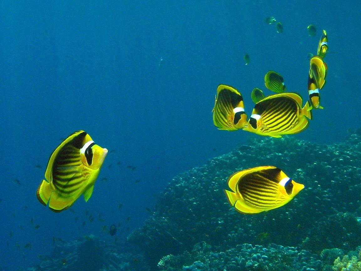 Картинка рыбы в аквариуме - de98