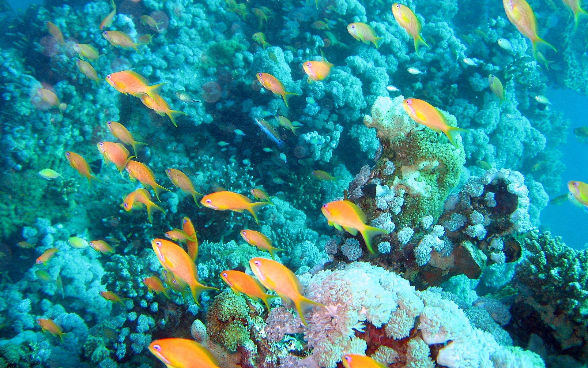 Картинка рыбы в аквариуме - eef