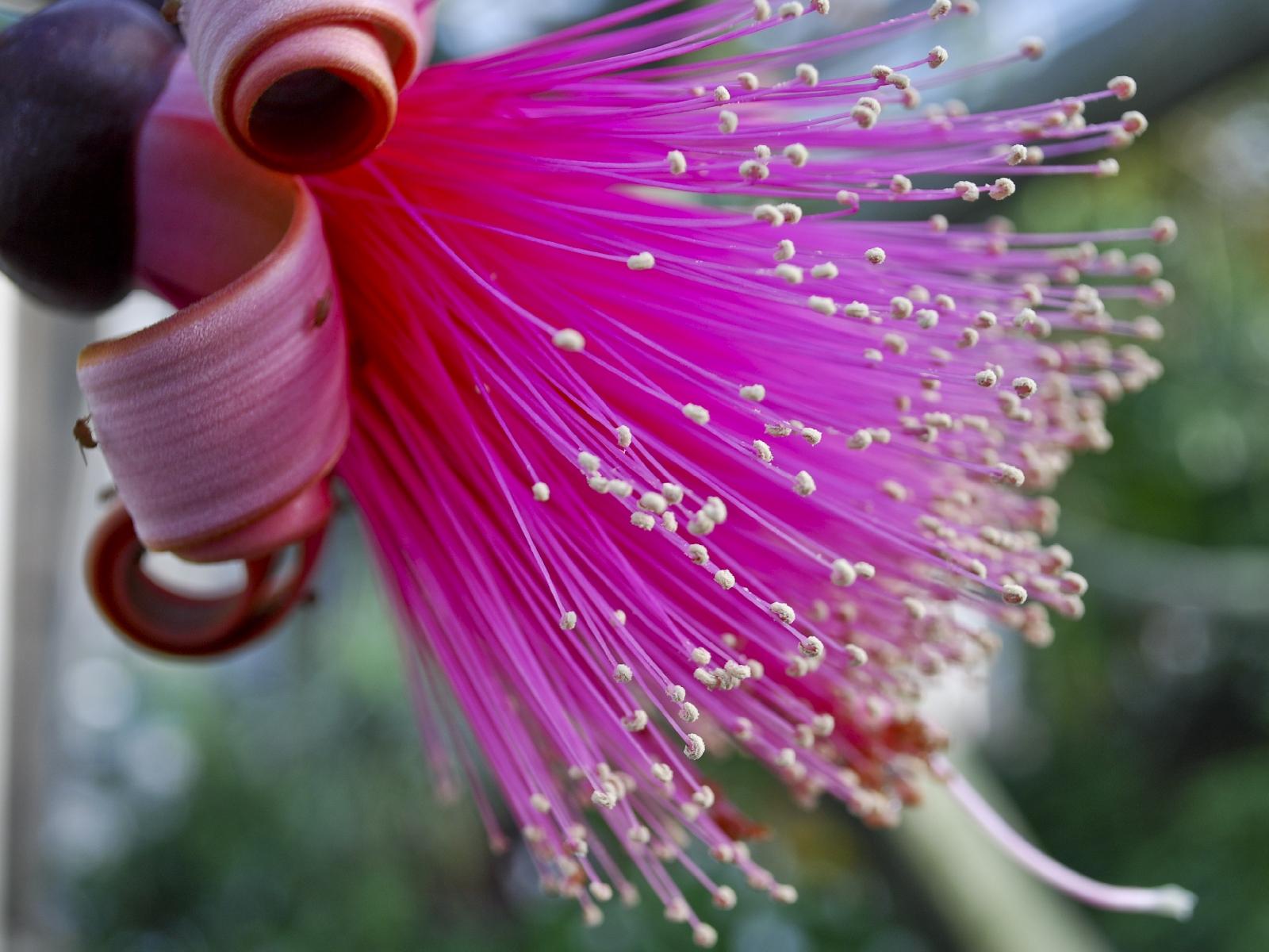 Нажмите на картинку, чтобы увеличить ...: www.kartinki24.ru/kartinki/flowers/9525.html