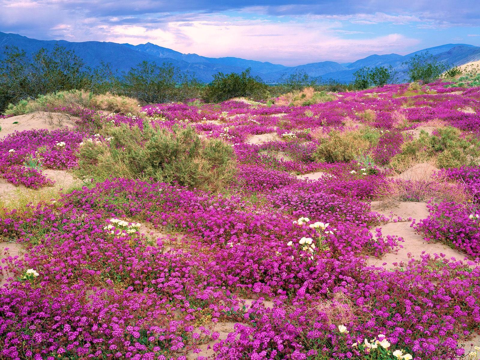 Рослини в пустелі фото 18 фотография