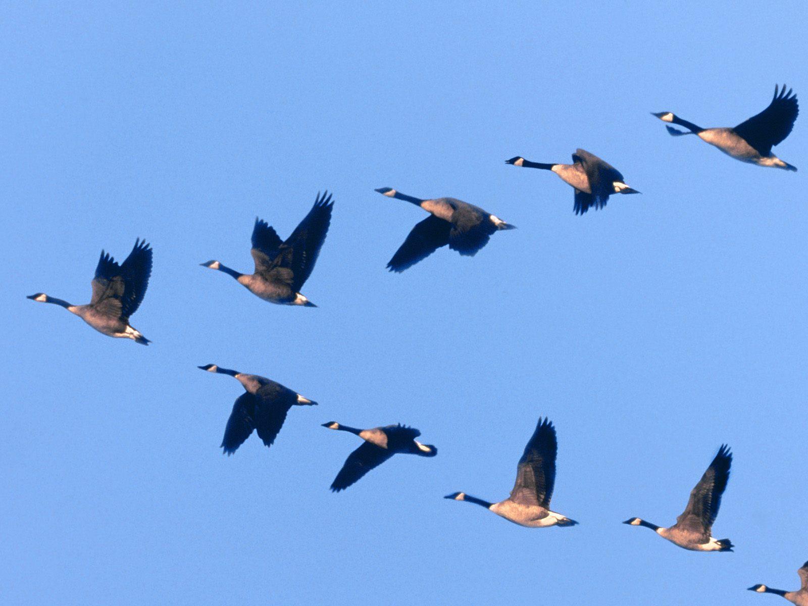 осенью улетают птицы картинки