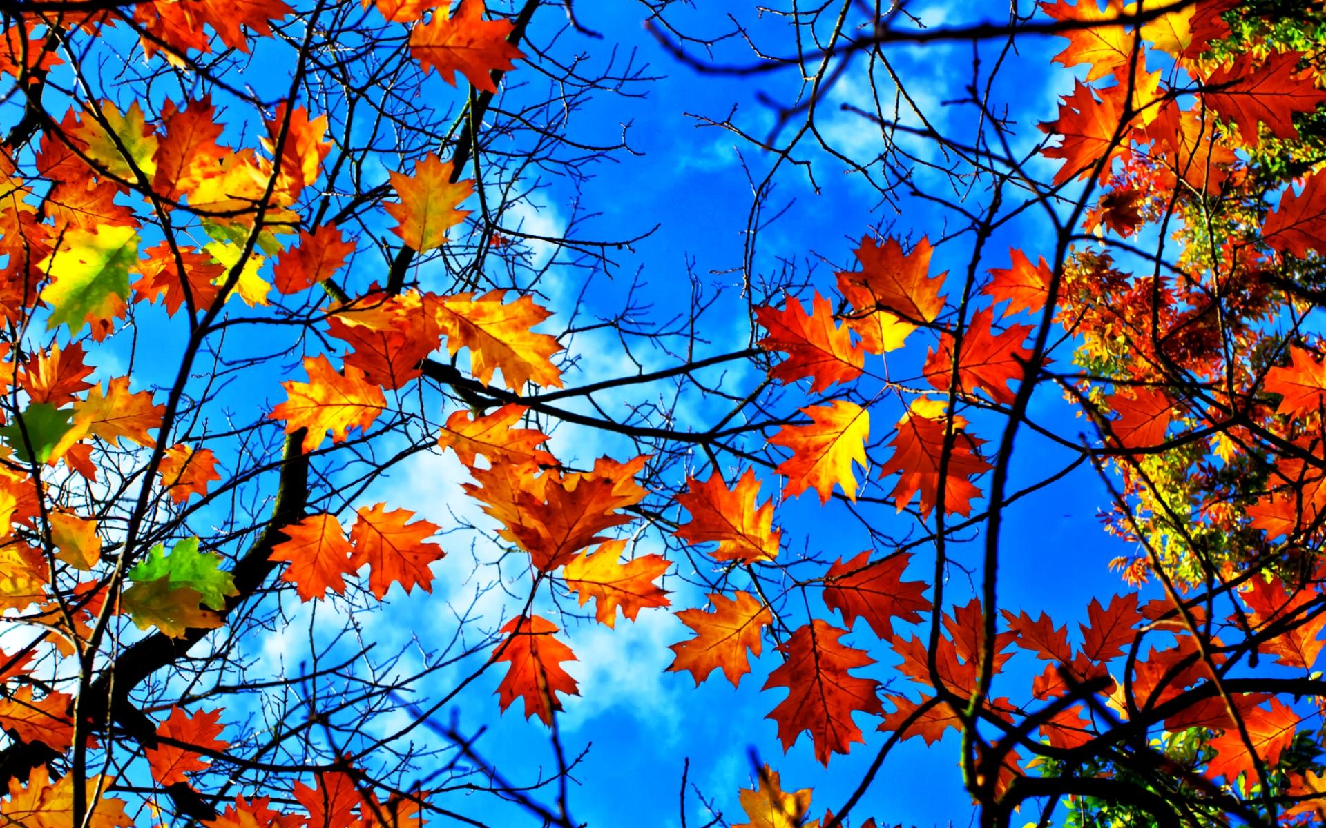 Картинки осенних листьев для вырезания цветные - 7c3fa