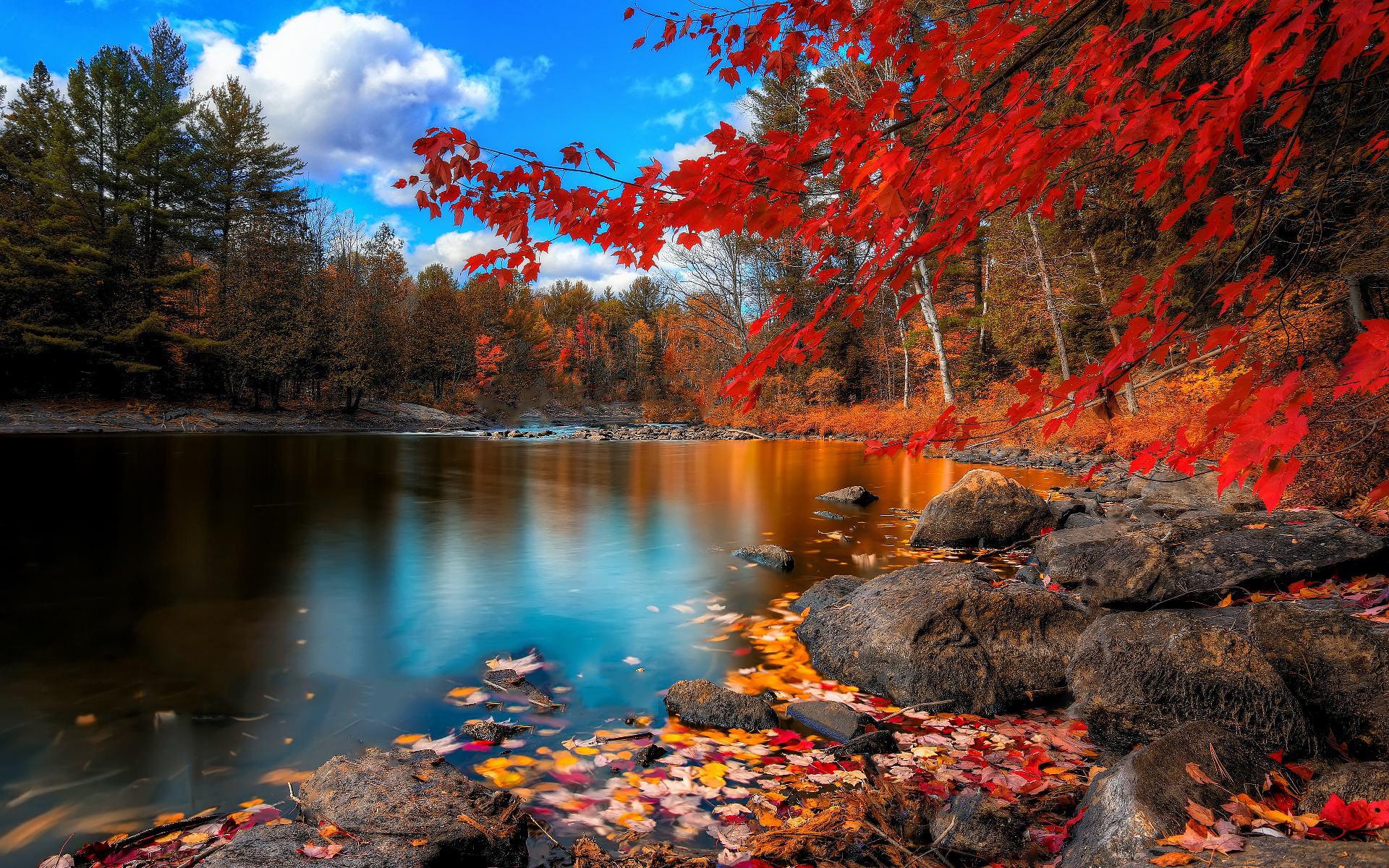 картинки природа осень